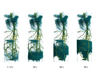 The researchers used fast neutron tomography to acquire a time series showing water ascending into a plant's root system after injection of deuterated water from the bottom.  Credit: Christian Tötzke, University of Potsdam
