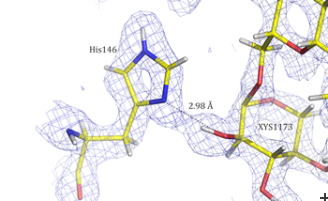 Neutrons used in visualization of protein residues